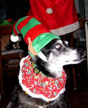 I am a 20 year old dog and I hate to dress up like this! Make Ma stop now!!!!