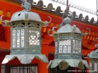 JAPAN - Nara - Kasuga-Taisha Shinto Shrine - Hanging bronze lanterns