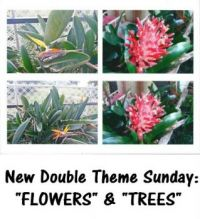 "New Theme Sunday: ""Trees & Flowers"" (I forgot today was Thursday, DUH, so I'm late posting this)"