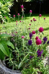 Back garden beauties.