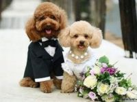 g.just married