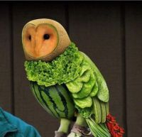 Fruit and Veggie Owl
