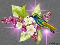 PUZZLE - Hummingbird On Lilacs