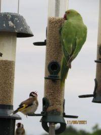 Hey You!!!!! Get off my feeder.