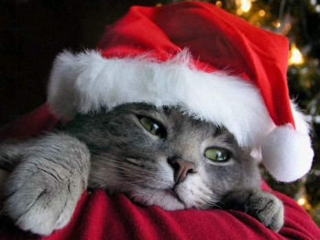 Christmas Kitty Meow!
