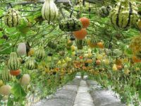 Unique way to store melons and squash