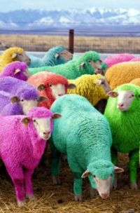 Mulit Coloured Sheep, by Cooldawg