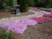 Creeping Phlox and path