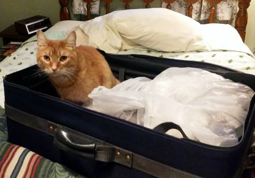 Wally:  You're not going to forget to pack me, are you?