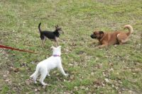 Series Dogs in the Park.  Cora isn't scared, even when Bambi and Norman decide to start romping around