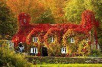 Barevný dům