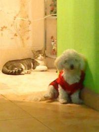 DANILO Y KITTY