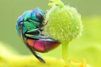 4.  ~ Fruit Fly.