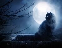 58932-wallpapers-full-moon-black-cat