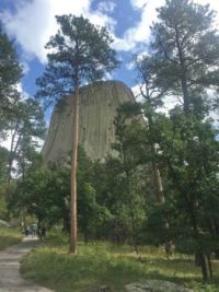 Devils Tower Framed In The Trees
