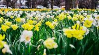 Theme: Spring has Sprung