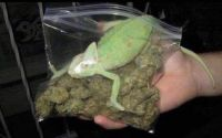 Bought a Mariguana yesterday.