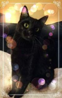 Black cat Brus