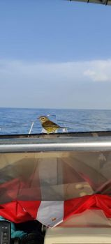 Boat hitchhiker