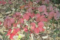 A little fall color on the ground.