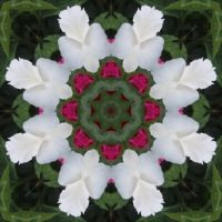 Kaleidoscope 73 white star medium