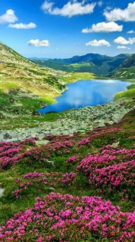 Glacier lake and pink rhododendron flowers in Retezat National Park, Carpathian Mountains, Romania