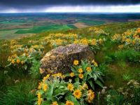 Rock and yellow flowers