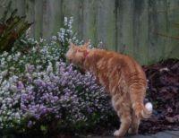 Ferdy - no, sorry  - it's heather...