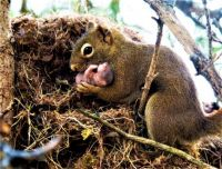 Mama Squirrel with one of her babies