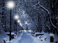 winter in the park -hace fun