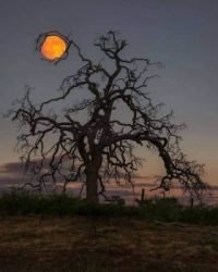 'Holding up the Moon' by Eric Houck