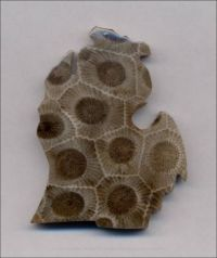 Michigan's Petoskey Stone