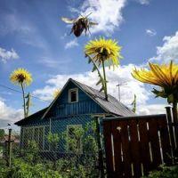 Giant Bee!!!!