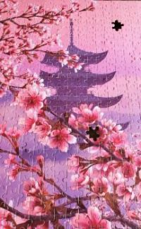 Cherry Blossoms - Mt Fuji