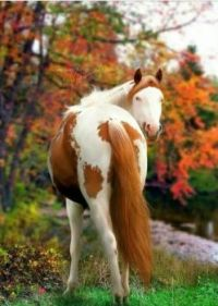 The Beauty of Horses in Autumn