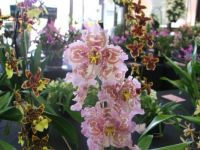 Prize Orchids