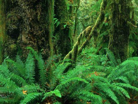 3  ~  'Bosnimph' Rainforest.