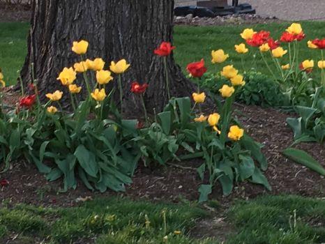 Spring 2019 in Lake St. Louis, MO