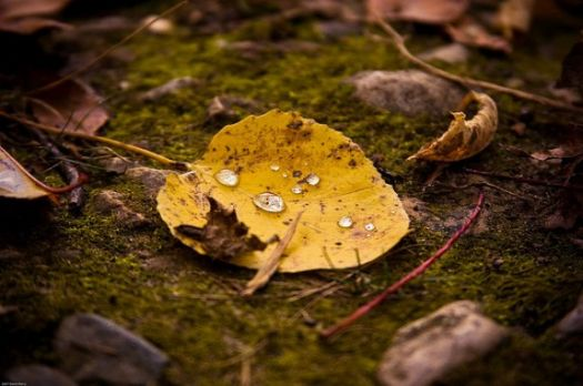 Tears of fall - photo by Dawn Perry