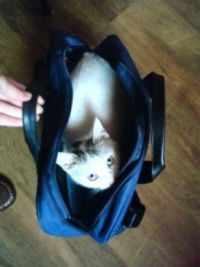 Kitty in a bag