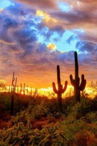 Arizona by Craig Anderson