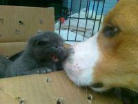 13. June 2011 - kitten and Spot