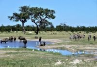 THEME:  National Parks . . .  Chobe,  Botswana
