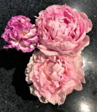 Peonies and Carnation (large)