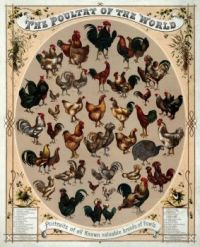 The Poultry of the World, 1868
