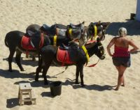Donkeys waiting for their customers