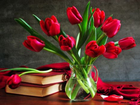 Red tulips for a blue lady