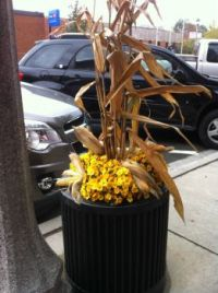down town planters in fall