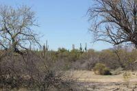 Saguaro NP, Tucson, AZ