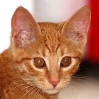 Kitten Mango - 2012